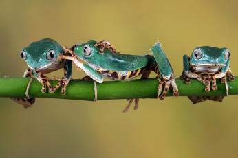 обоя животные, лягушки, лапки, зеленые, веточка