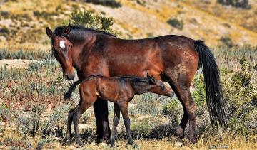 Картинка животные лошади