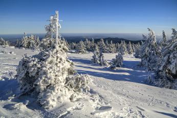 Картинка saxony anhalt germany природа зима снег германия саксония-анхальт saxony-anhalt деревья