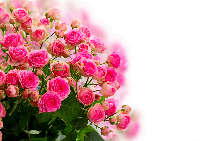 Обои цветы для открыток, открыток
