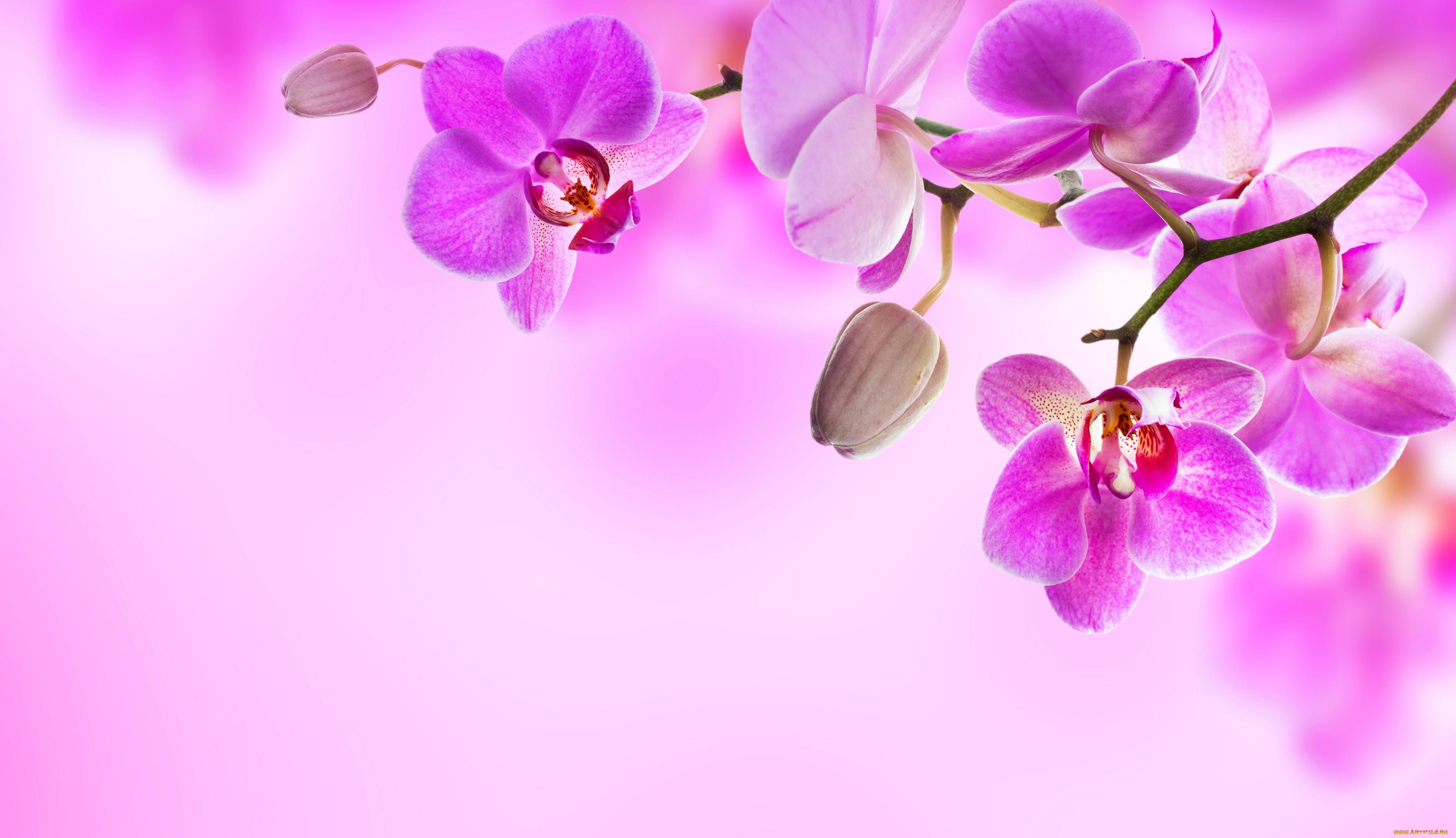 Фон открытки с днем рождения с орхидеями