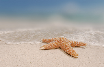 обоя разное, ракушки,  кораллы,  декоративные и spa-камни, море, берег, морская, звезда