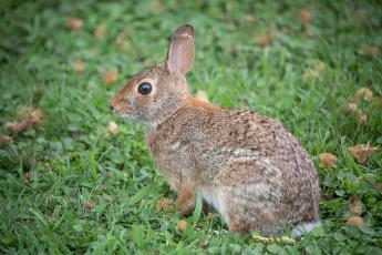 обоя животные, кролики,  зайцы, животное, трава, ушки, природа, кролик