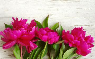 обоя цветы, пионы, beautiful, flowers, pink, wood, розовые, peony