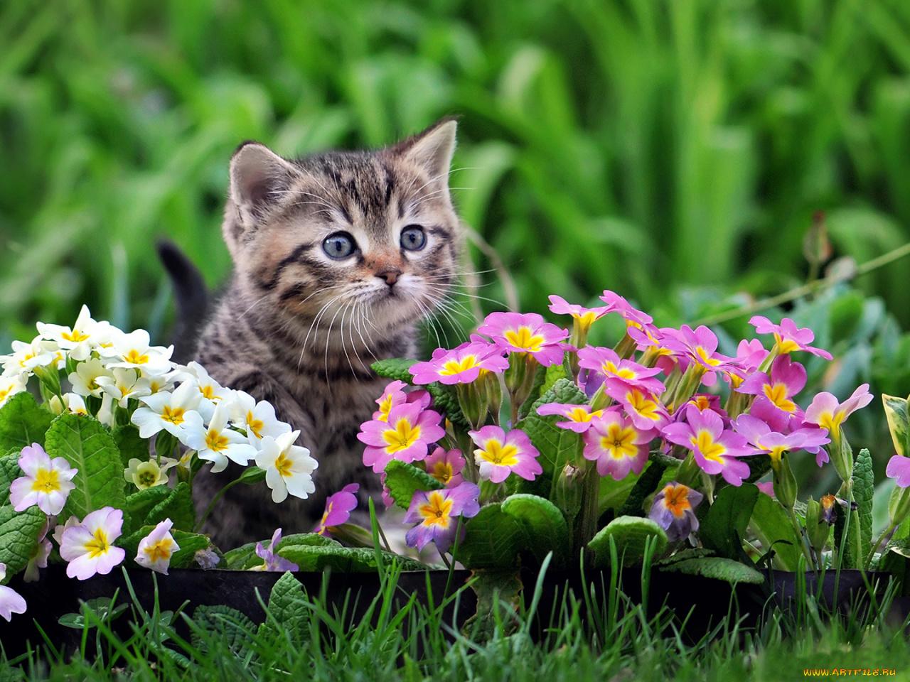 Надписью люблю, фото открытки с животными