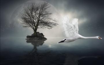 Картинка разное компьютерный дизайн луна дерево лебедь вода