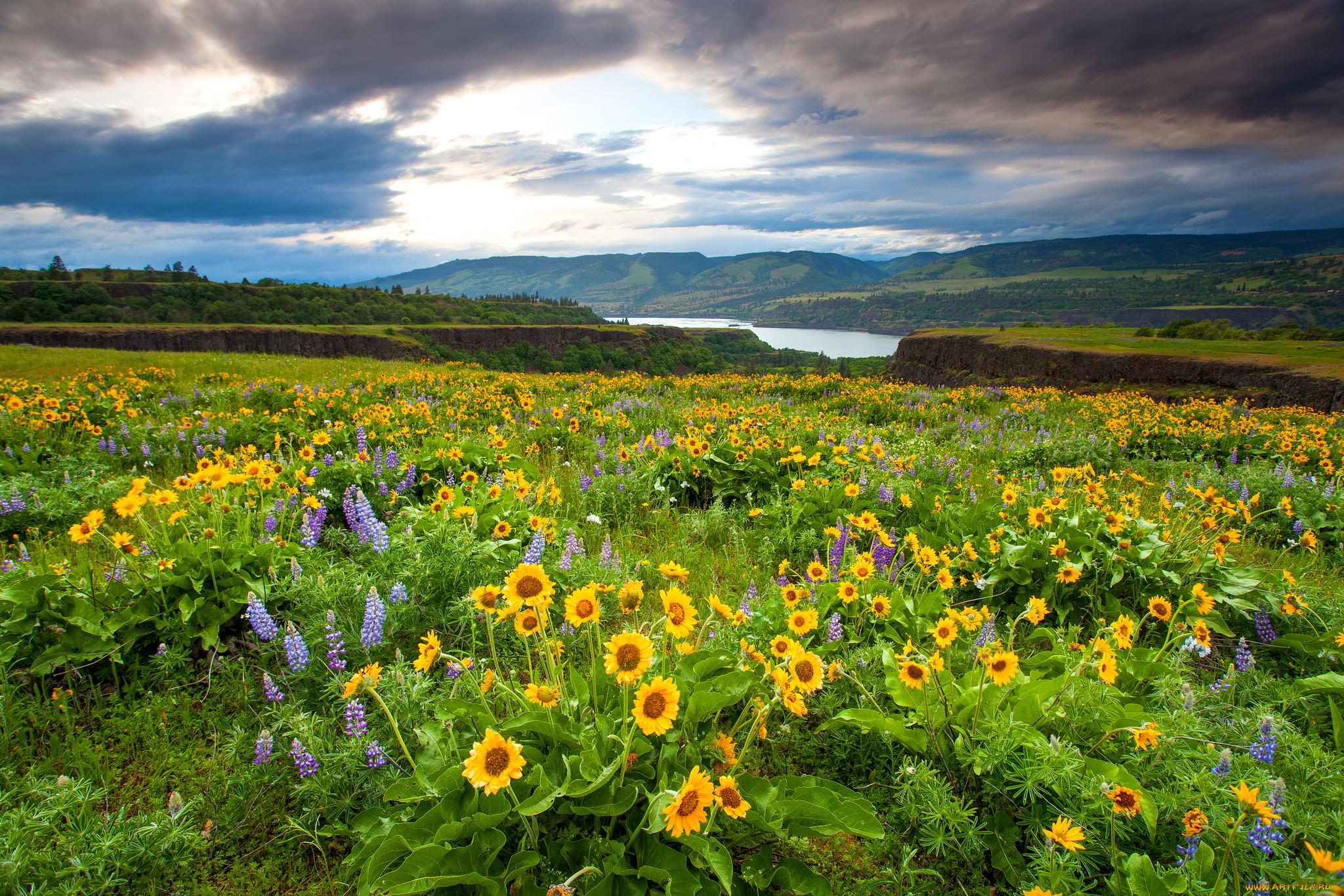 Расставание парня, картинки поля с цветами и речкой