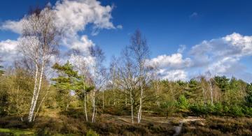Картинка природа лес облака