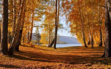 Картинка природа лес осень горы озеро
