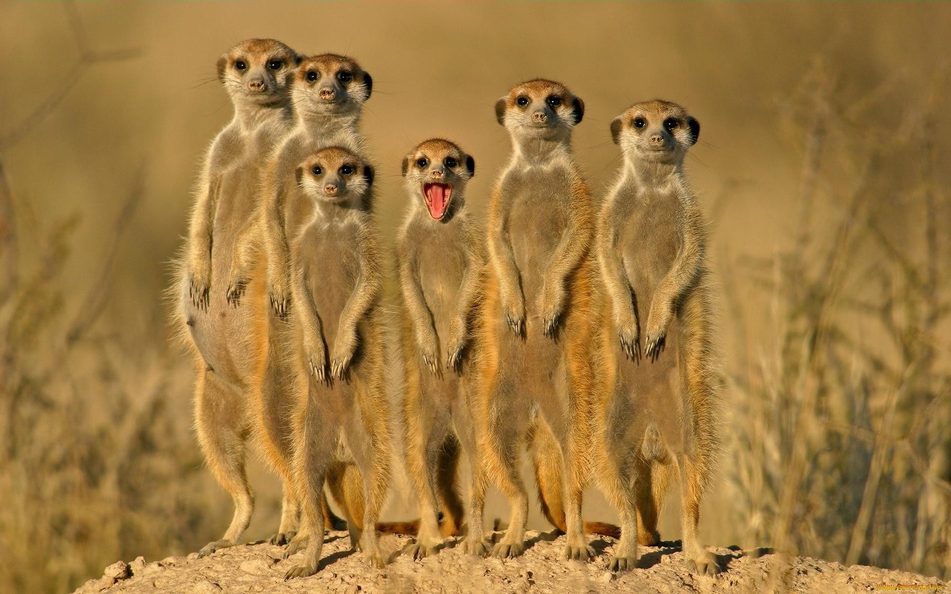 Поздравление, прикольные картинки с животными видео