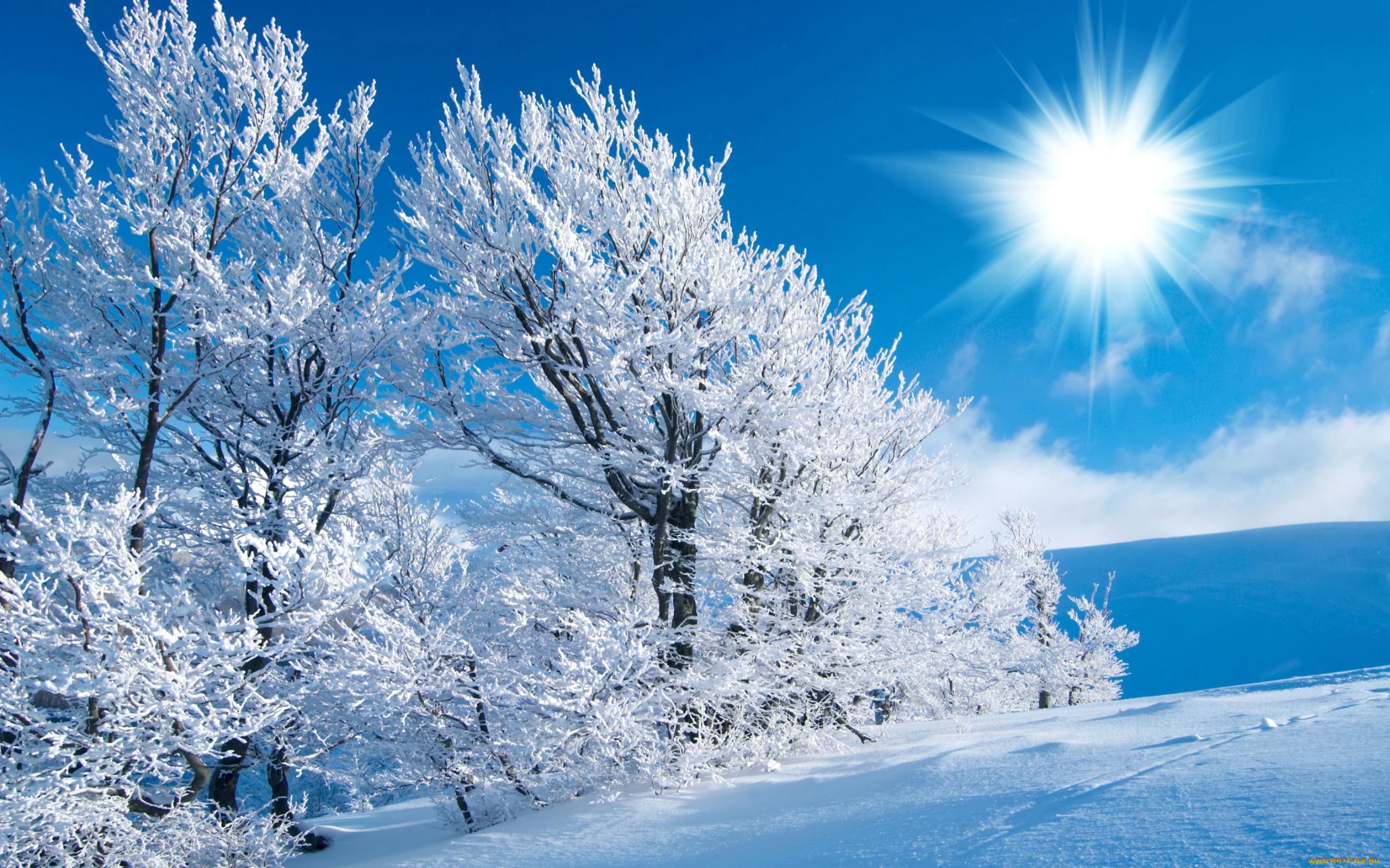 Золотом, зима новые картинки