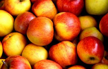 обоя еда, Яблоки, много, урожай, румяные