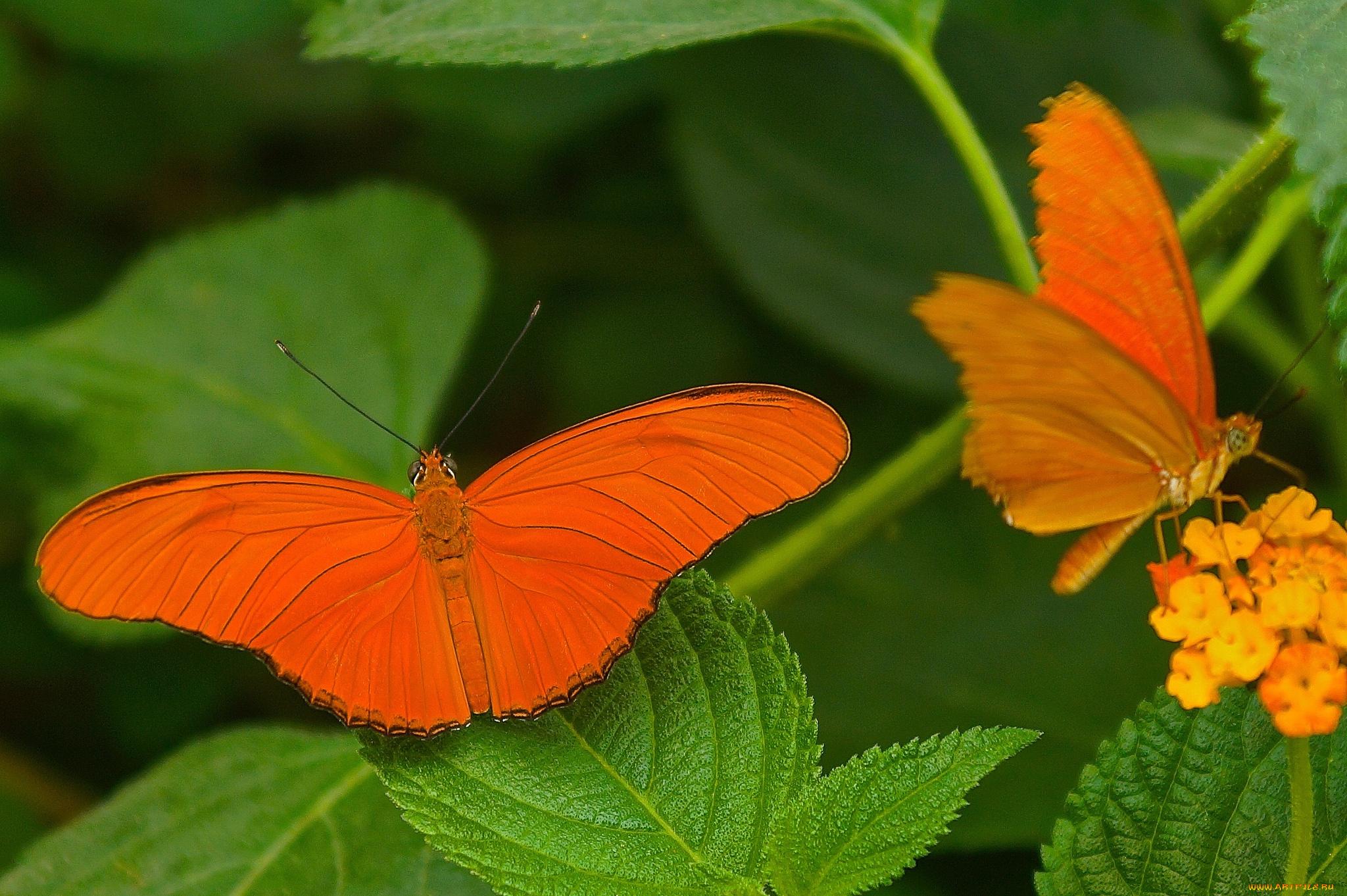 Желтая бабочка на оранжевых стеблях скачать