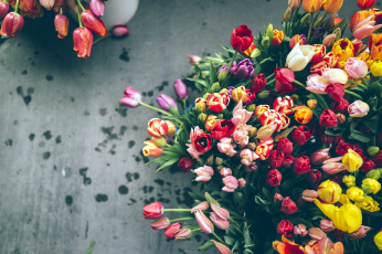 Картинка цветы тюльпаны разноцветный