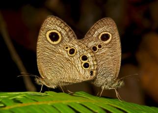 обоя животные, бабочки,  мотыльки,  моли