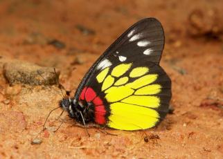 обоя животные, бабочки,  мотыльки,  моли, бабочка