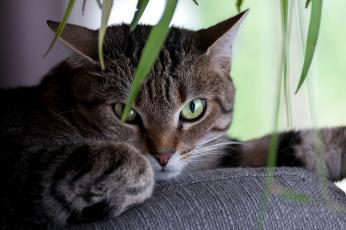 обоя животные, коты, киса