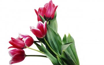 обоя цветы, тюльпаны
