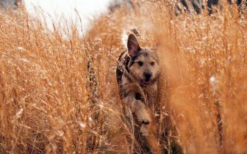 обоя животные, собаки, трава, бег, луг, собака