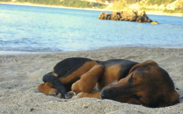 Картинка животные собаки вода песок