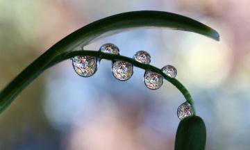 Картинка природа макро капли лист