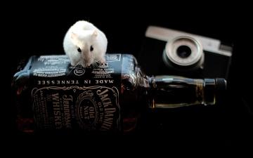 Картинка бренды jack daniel`s крыска
