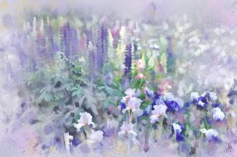 Картинка рисованные цветы ирисы