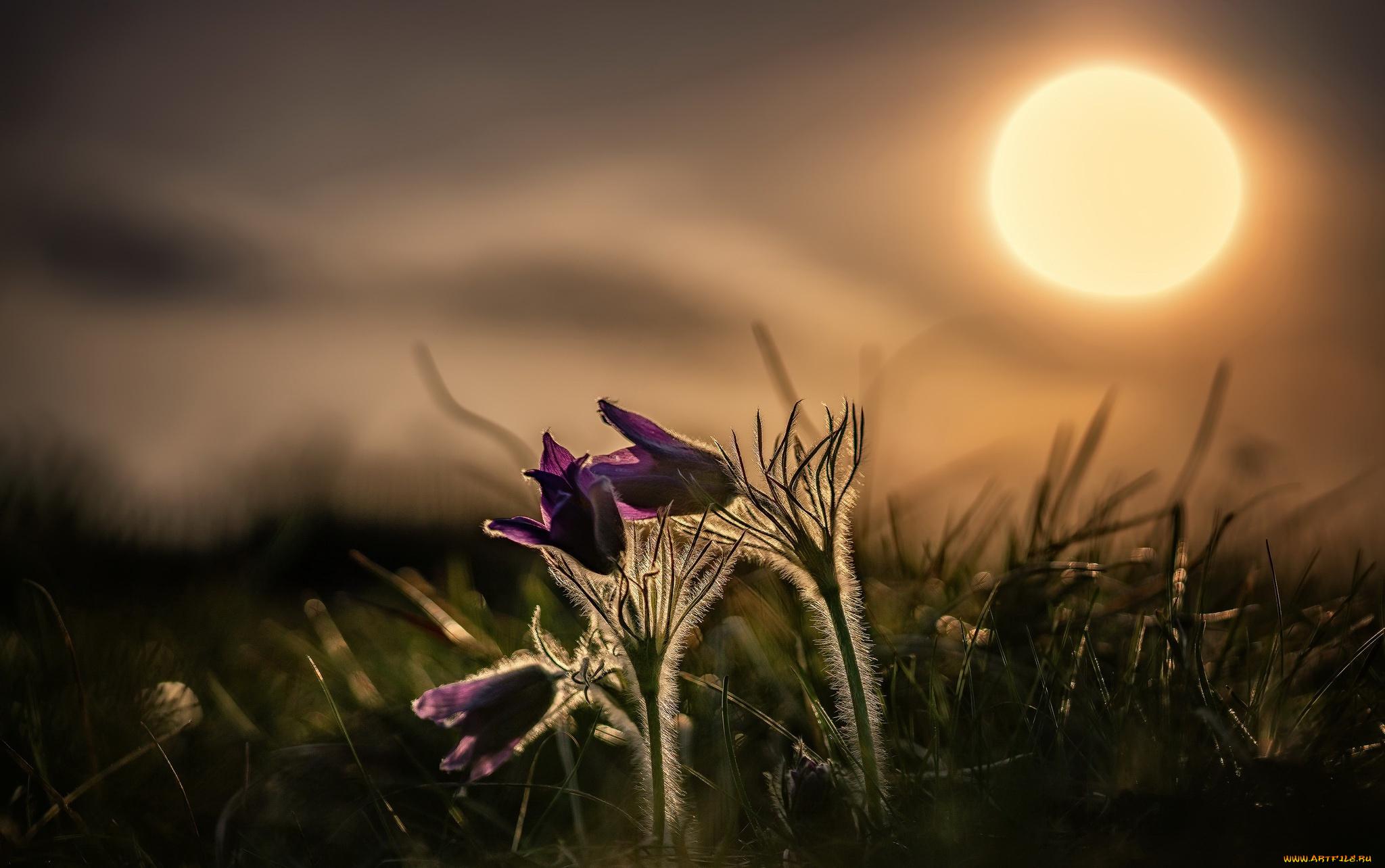 основном красивые картинки весенние цветы в ночи многогранна