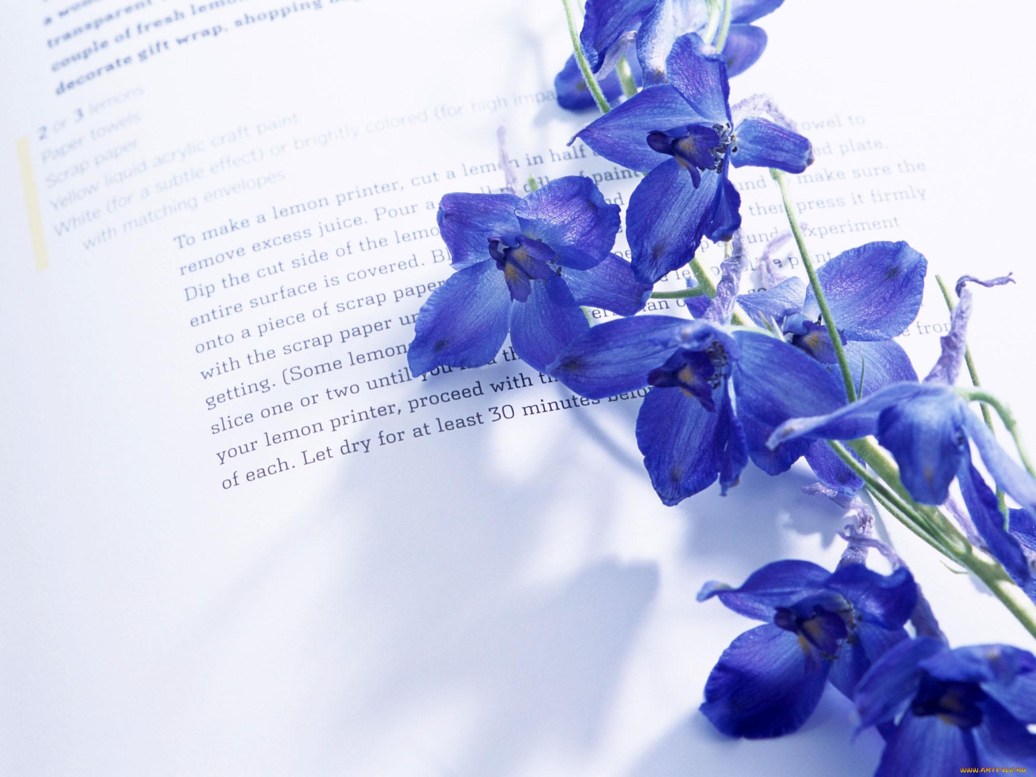 Цветы стихи в картинках, для мужчины без
