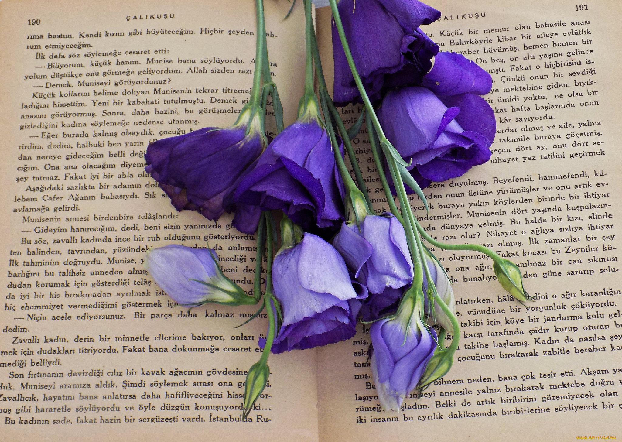 обои для рабочего стола эустома цветы № 634136 бесплатно