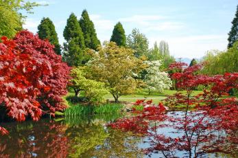Картинка природа парк водоем деревья
