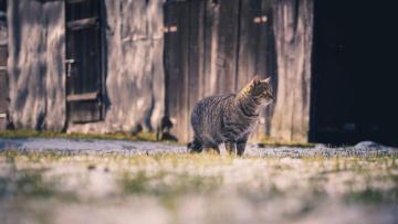 Картинка животные коты анфас