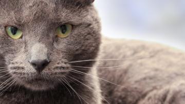 Картинка животные коты профиль