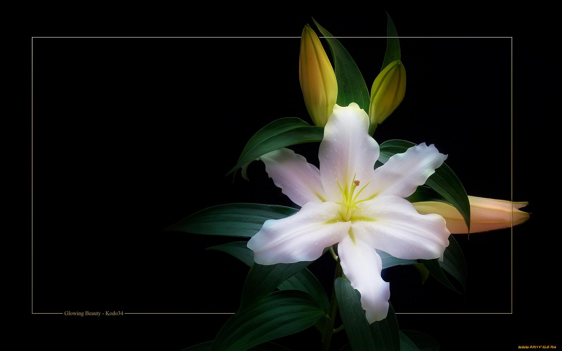 Открытки гифки лилии