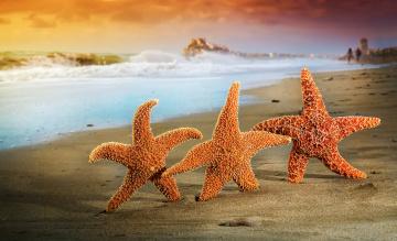 обоя животные, морские звёзды, лето, песок, звезды, пляж, море