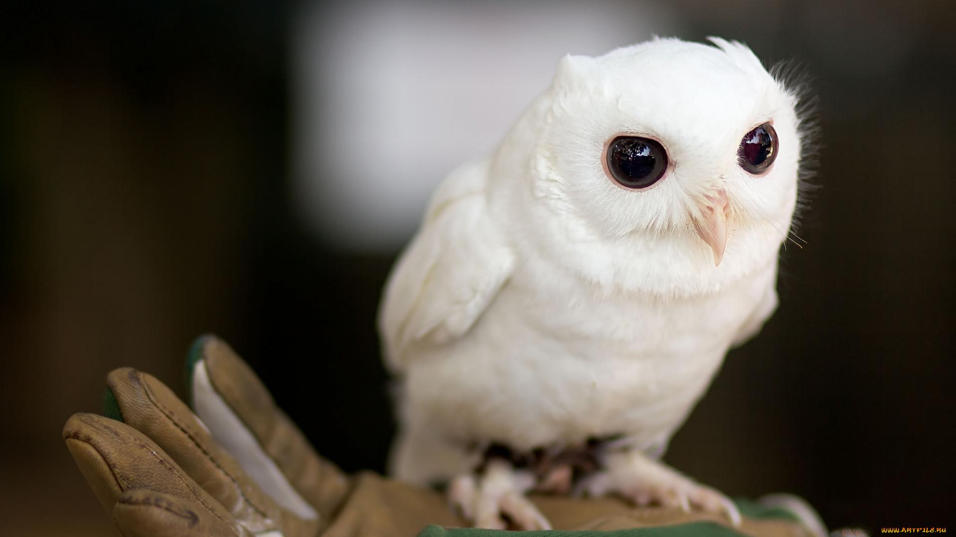 милые совята фото исследования показали