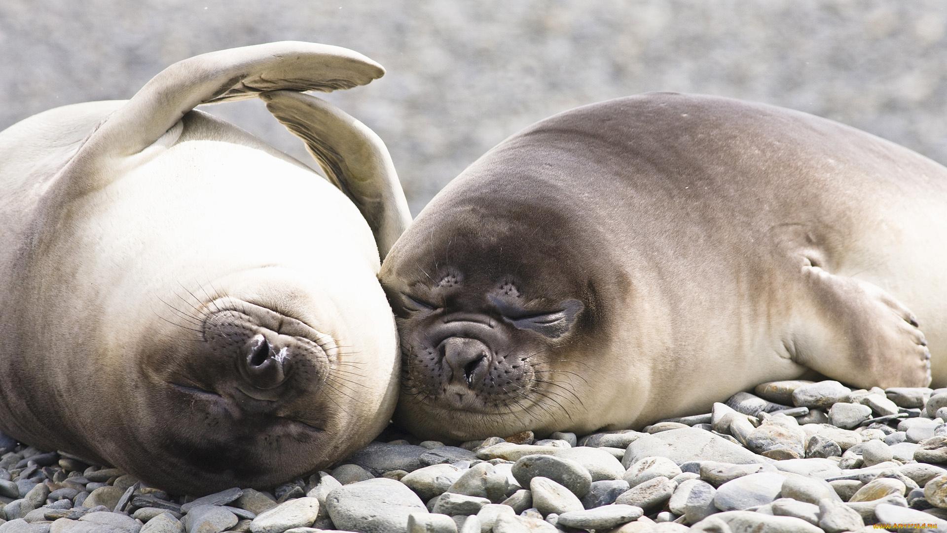 Картинки морских животных смешные, картинки