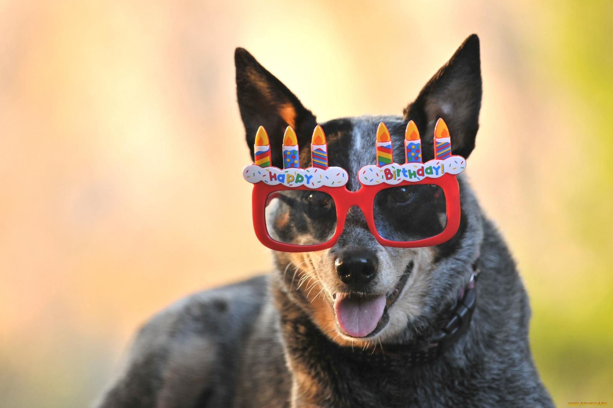 Хомяка молитва, крутые картинки собаки в очках