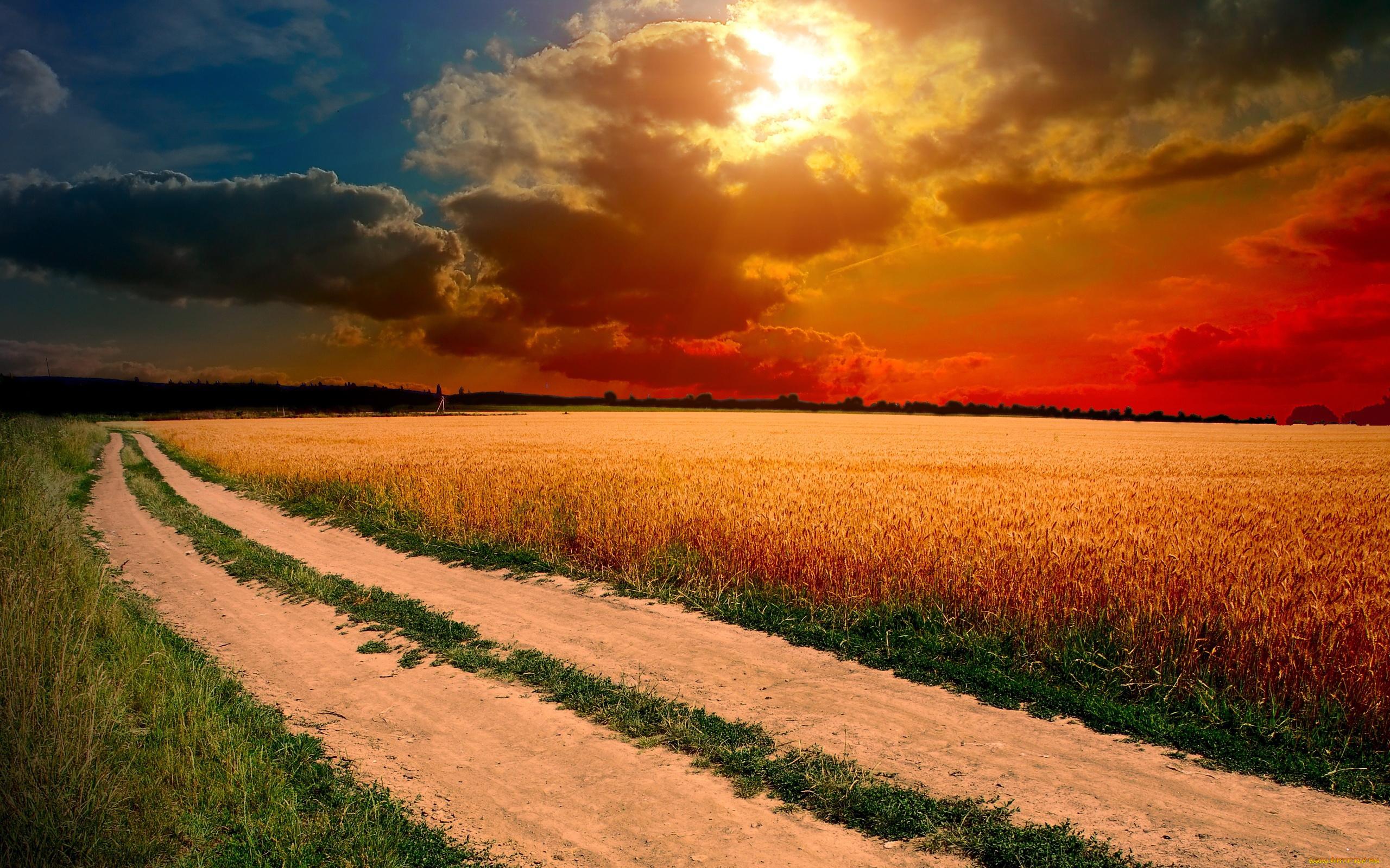 плантация зелень закат поле бесплатно