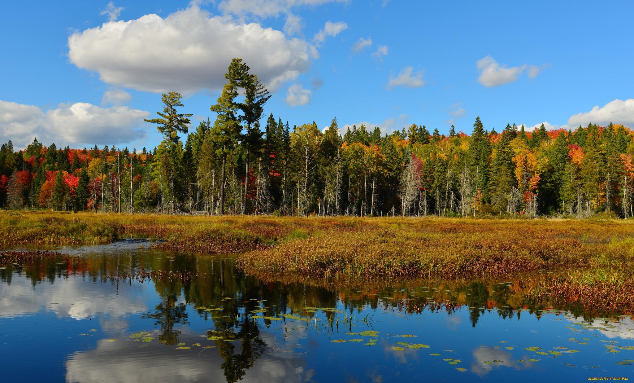 природа озеро деревья небо оссень  № 2535997 загрузить