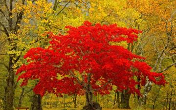 Картинка природа лес листья дерево