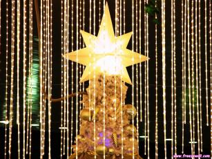 Картинка праздничные Ёлки