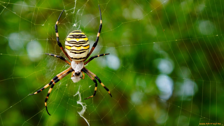 природа животные паук  № 2544246 загрузить