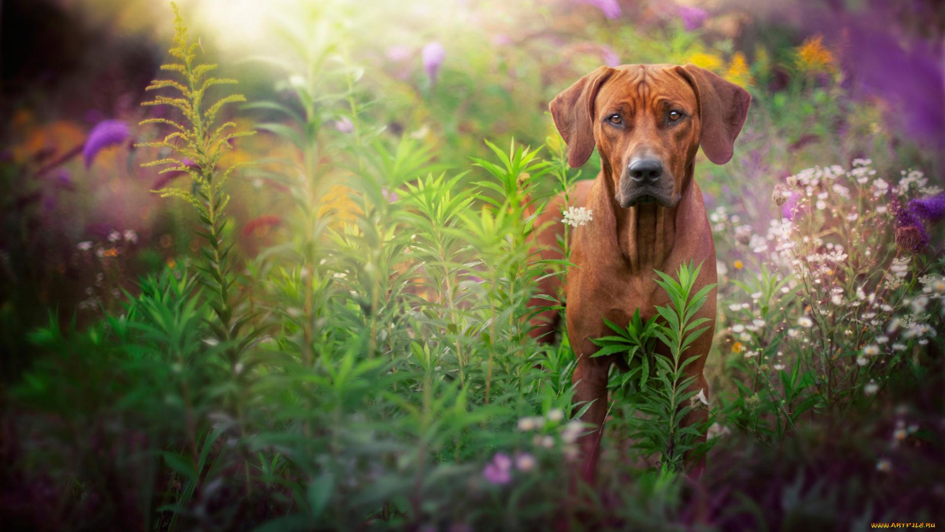 Пёс на поляне смотреть