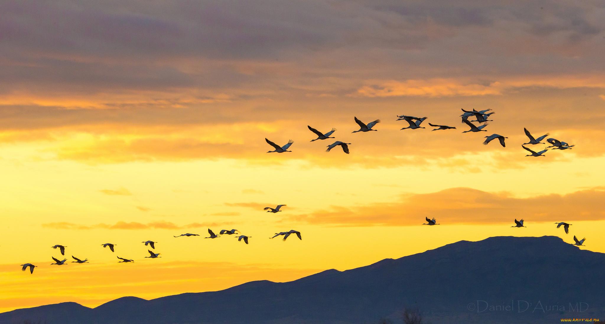 Картинки анимация птицы улетают, открытки майл