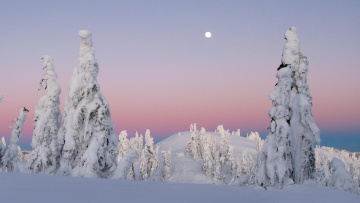 Картинка природа зима снег вершина небо ели солнце