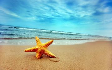 обоя морская, звезда, на, песке, животные, морские, звёзды, песок, море, берег