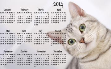 Картинка календари животные кот