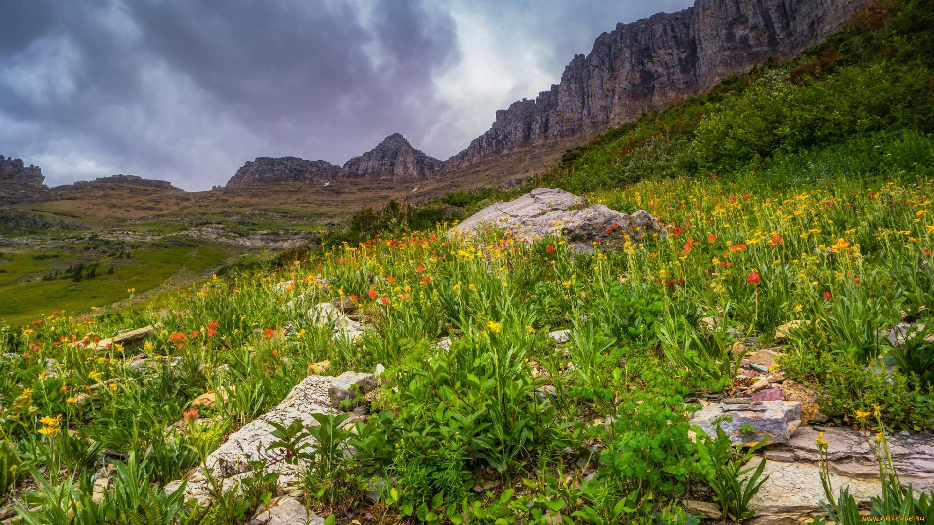 трава в горах без регистрации