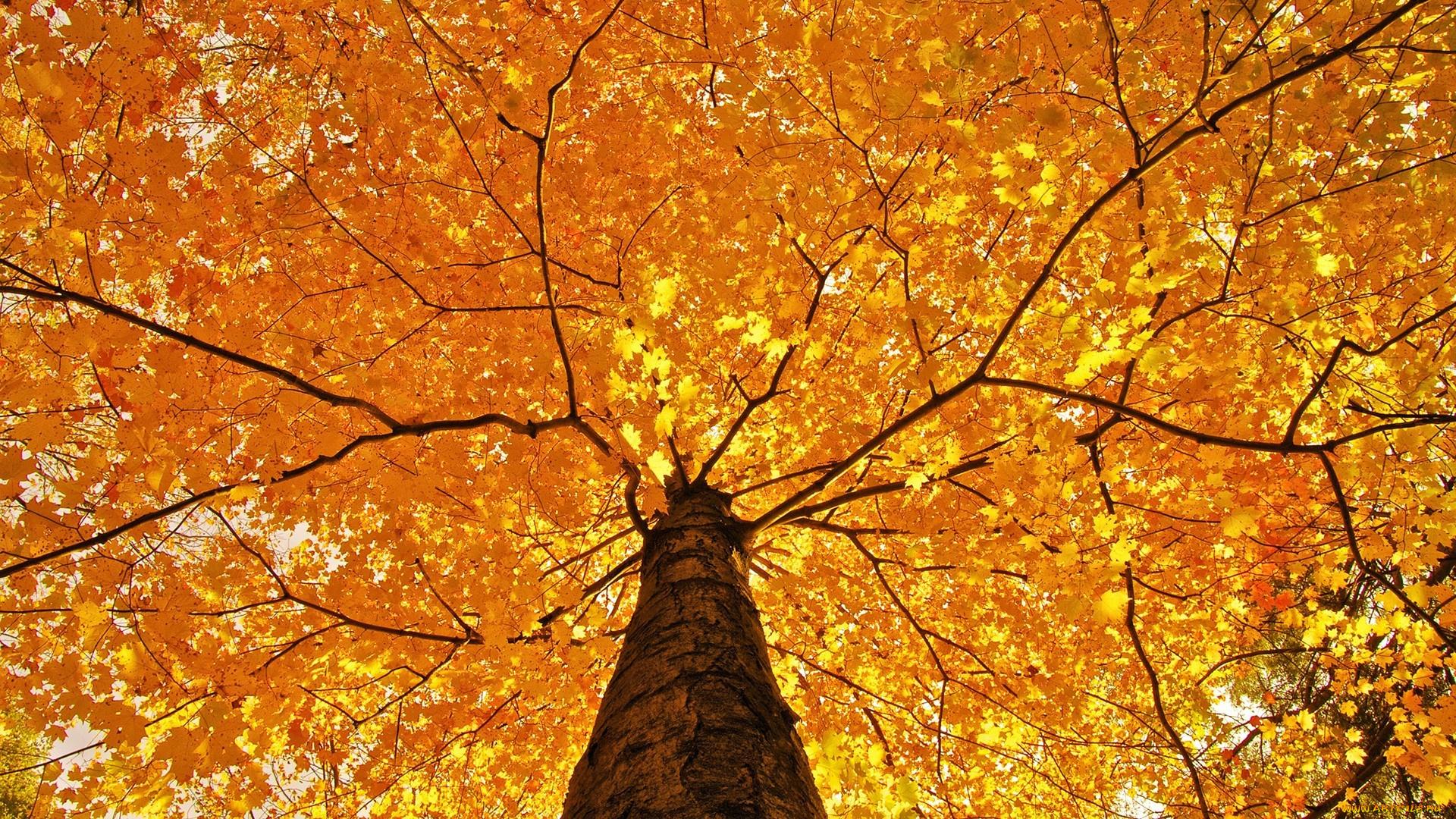 природа лист осень  № 543346 бесплатно